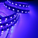 Ruban LED Professionnel 5 Mètres - 120 LED/m - 3528 - Ultraviolet